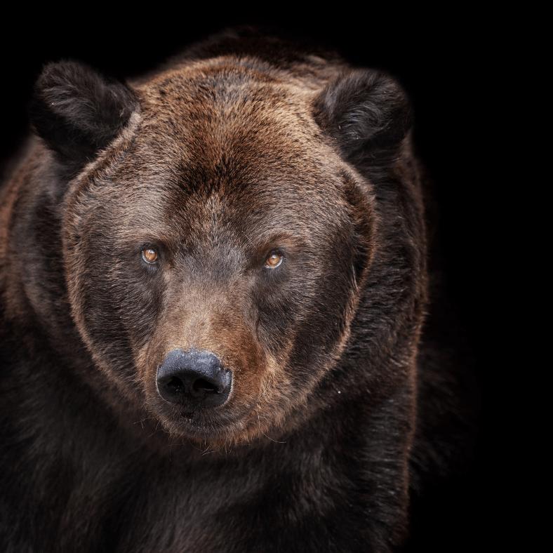 si j'étais un animal, je serai un ours